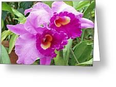 Purple Cattleya Orchids Greeting Card
