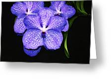 Purple Orchids - Flower Art By Sharon Cummings Greeting Card