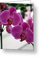 Royal Orchids  Greeting Card