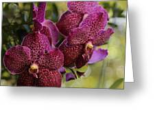 Purple Orchids With Bokeh Greeting Card