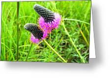 Purple Pair Greeting Card