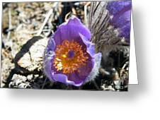 Purple Pan Gold Greeting Card