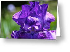 Purple Pandora Greeting Card