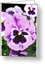 Purple Pansy Close Up - Digital Paint Greeting Card