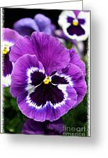 Purple Pansy Close Up Greeting Card