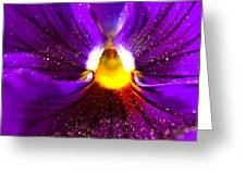 Purple Pansy Detail Greeting Card