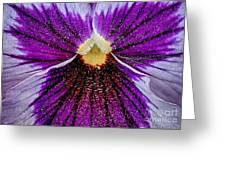 Purple Pansy In Pollen Greeting Card
