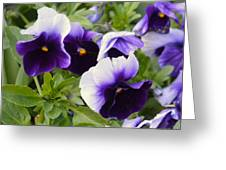 Purple Pansy Melody Greeting Card