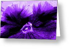 Purple Pansy Rising Greeting Card