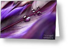 Purple Paradise Greeting Card