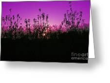 Purple Paradise Sunset By Diana Sainz Greeting Card