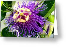 Purple Passion Flower Greeting Card