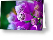 Purple Passion Greeting Card by Tammy Smith