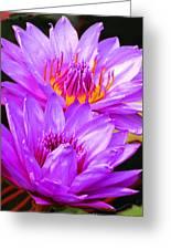 Purple Perfection Greeting Card