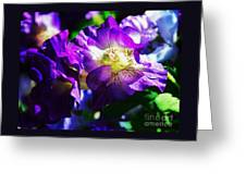 Purple Petunia Portrait Greeting Card