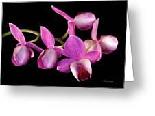 Purple Phal Greeting Card