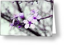 Purple Pink Blossoms Greeting Card