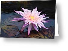 Purple Pink Yellow Waterlily... Greeting Card