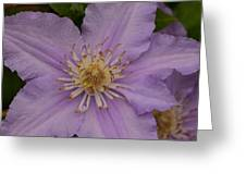 Purple Pleaser Greeting Card
