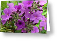 Purple Popping 1 Greeting Card