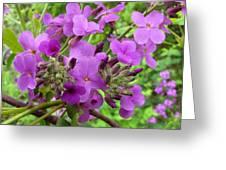 Purple Popping 2 Greeting Card