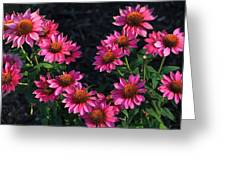 Purple Pow Echinacea  Greeting Card