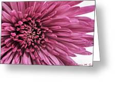 Purple Pow Greeting Card