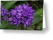 Purple Pride Greeting Card