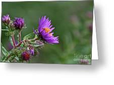 Purple Profiles Greeting Card