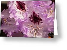 Purple Rhodo Greeting Card