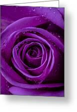 Purple Rose Close Up Greeting Card