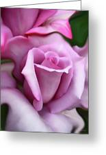 Purple Rose Portrait Greeting Card