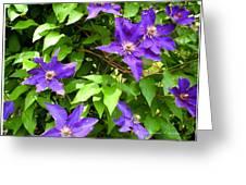 Purple Rush Greeting Card