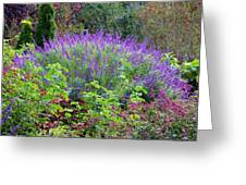 Purple Salvia In The Garden Greeting Card