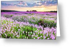 Purple Sea Greeting Card