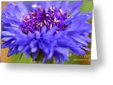 Purple Spike Greeting Card