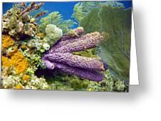 Purple Sponge Greeting Card