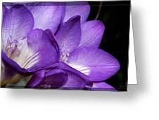 Purple Springtime Greeting Card