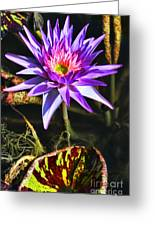 Purple Star Water Lily  By Diana Sainz Greeting Card