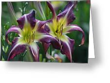 Purple Stargazers Greeting Card