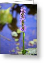 Purple Swamp Flower Greeting Card