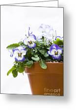 Purple Swirl Violas Greeting Card