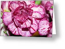 Purple Tiger Rose Greeting Card