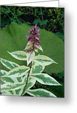 Purple Tipped Flower Greeting Card