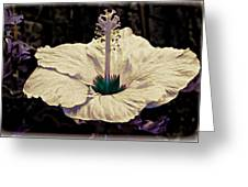 Purple Trim Greeting Card