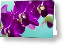 Purple Trio - Orchids Greeting Card