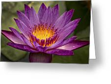 Purple Tropical Water Lily Greeting Card
