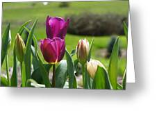 Purple Tulips Garden Art Print Tulip Flowers Greeting Card