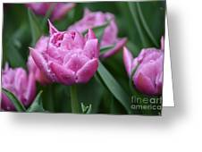 Purple Tulips In The Rain Greeting Card