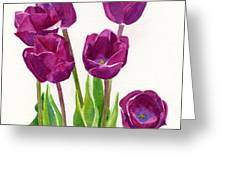 Purple Tulips Square Design Greeting Card